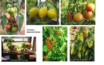 greenmansworld tomaten samen. Black Bedroom Furniture Sets. Home Design Ideas